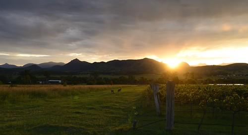 Kooroomba Lavender Farm Sunset