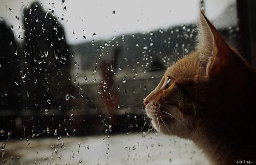 It´s raining....