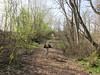 Path at the arboretum