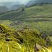 Gunung Ungaran, Jawa Tengah