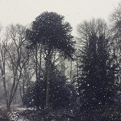 Good morning from Narnia #scotland #snow #stillwinter