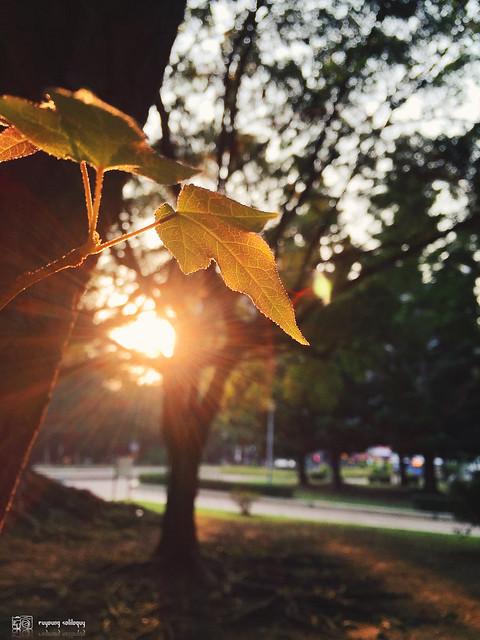 iPhone6_Plus_Photo_04