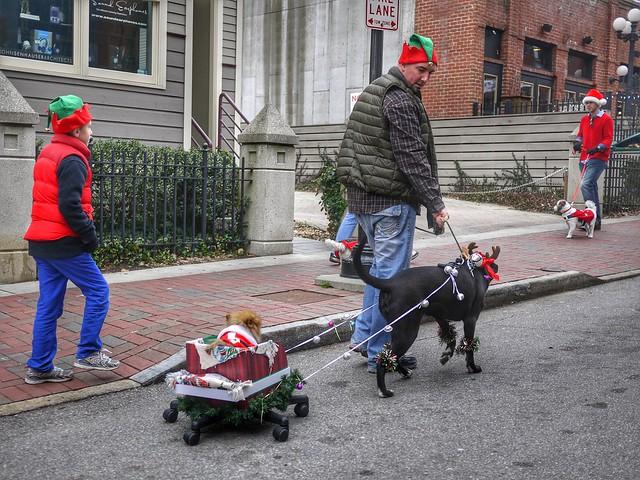 Raindog Parade