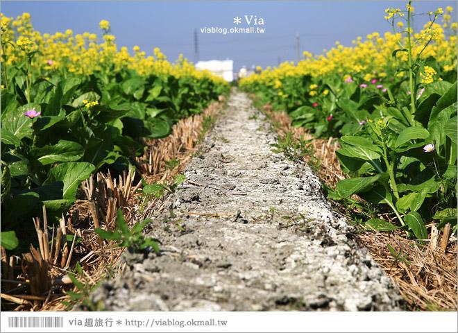 【南新彩繪村】彰化埔鹽/南新立體彩繪村~隱藏版的花海圍繞整村,美景如畫!43