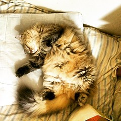 今天睡成這樣 #貓 #kitty #kitties #cat #pet #animal #cute