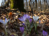 2015-02-19- crochi al boscone LR -2280