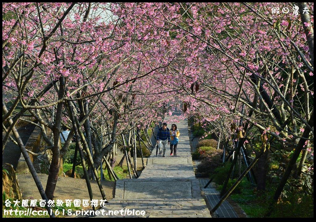 台大鳳凰自然教育園區櫻花DSC_5993
