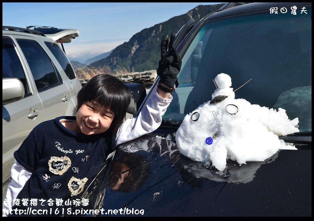武陵賞櫻之合歡山玩雪DSC_5333