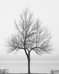 dltree