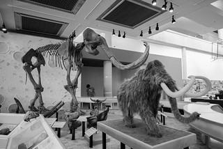 Wooly Mammoths.