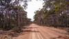 Wandoo Eucalypt forest
