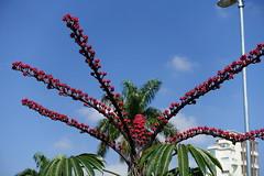 plant(0.0), amusement ride(0.0), park(0.0), amusement park(0.0), arecales(1.0), flower(1.0), pole(1.0), flora(1.0), sky(1.0),