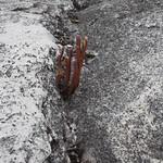 So, 01.03.15 - 15:13 - Unglaublich was auf 4500müM auf einem Stück Fels wachsen kann!!