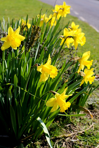 The Daffs of St Margaret's