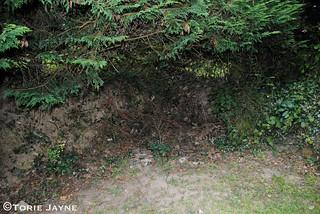 Side garden corner before