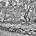 Village ruiné de Cazeneuve