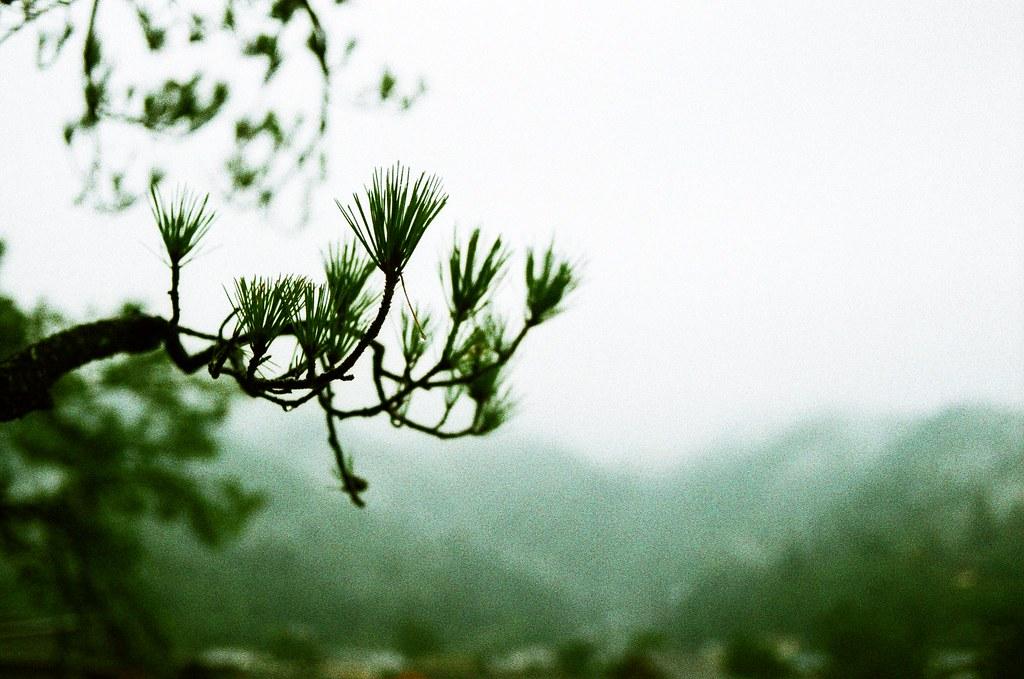 嚴島神社 広島 Hiroshima, Japan / Lomography Slide, XPro / Nikon FM2 去年來的時候也是下雨,今年雨更大,大到我背包裡的電腦浸水!  沒有撐傘,只是想要在雨中靜一靜。  Nikon FM2 Nikon AI AF Nikkor 35mm F/2D Lomography Slide / XPro 200 ISO 35mm 4942-0036 2016/09/25 Photo by Toomore