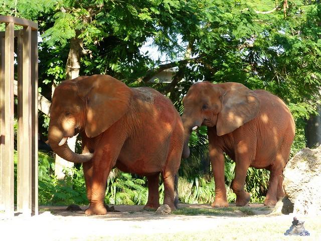 Zoo Miami 14.11.2014 131