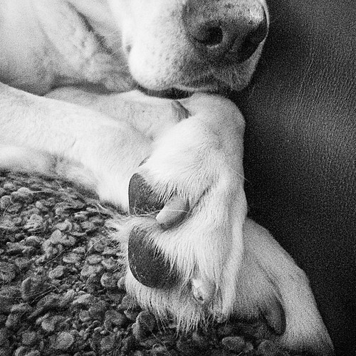 Paws crossed.