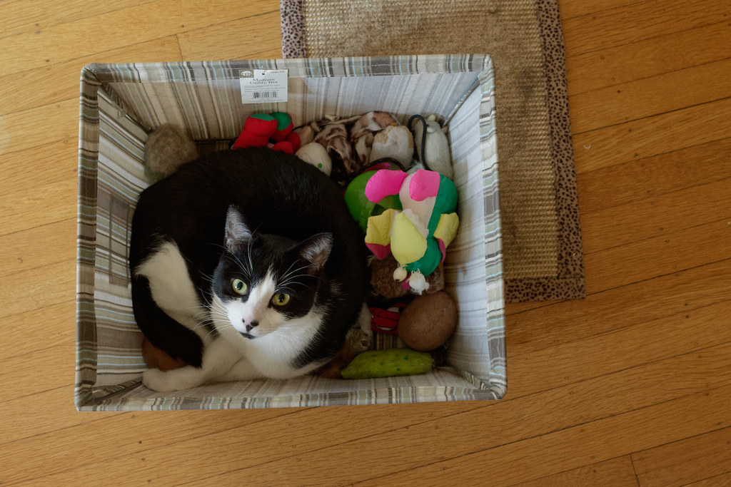 Our cat Boo resting in the box of cat toys