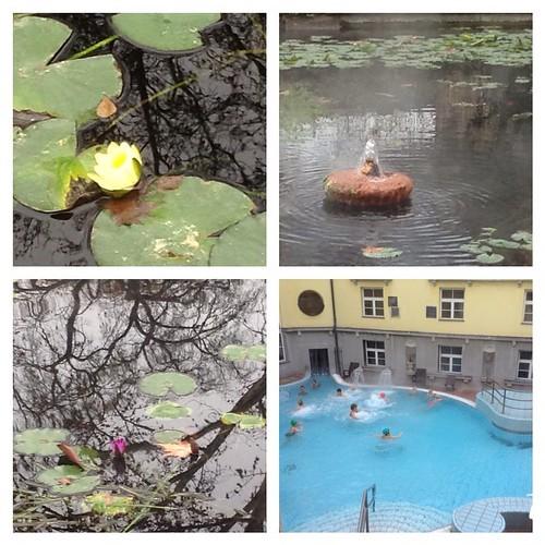 Вечноцветущие лотосы в термальных источниках))) #будапешт