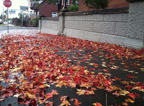 Cut pile leaves not so close