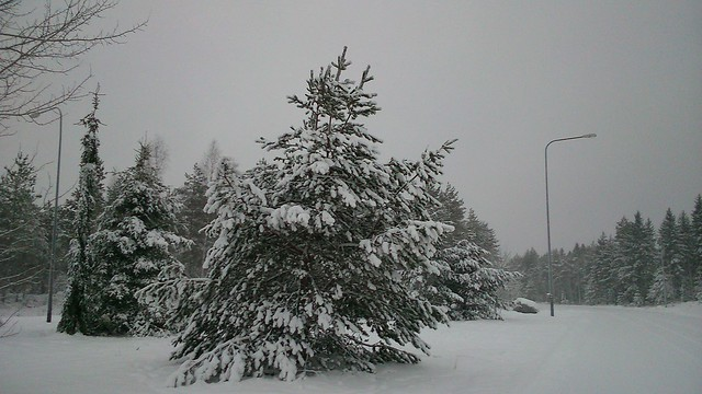 Firtree covered by snow // Елка под снегом