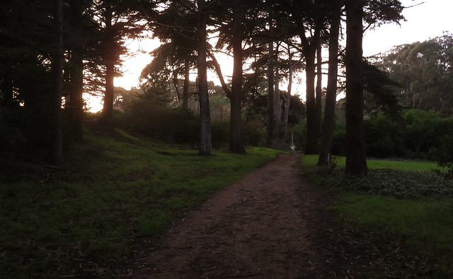 Sunset in Golden Gate Park, San Francisco (2014)