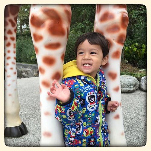 Nathan and a Giraffe. #family #zoo #taipeizoo #giraffe #taipei #taiwan #台北 #台灣