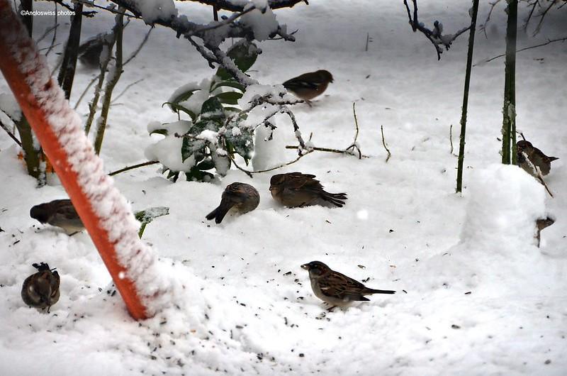 First snow birds 27.12.2014