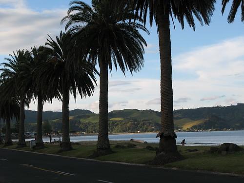 New Zealand 377