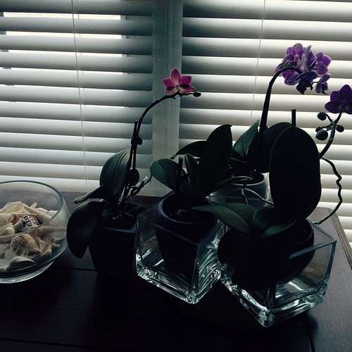 #orchid silhouettes #sunday afternoon relaxing #indoorgardening #karinb #nature #flowers