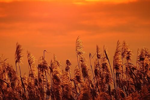 winter sunset sky reed nature poland polska zalewsulejowski