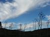 2000912300087_wild-fennel-sky_resize