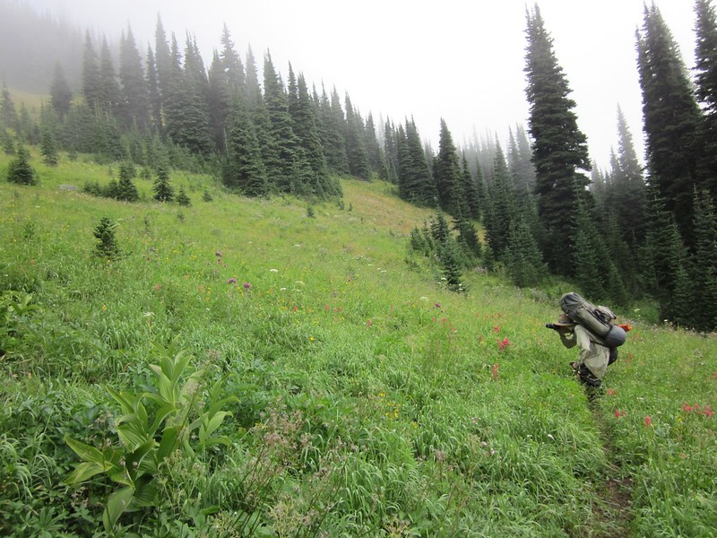 Me taking a photo of the flowery meadow above Canyon Creek on the way to Sky Pilot Pass.