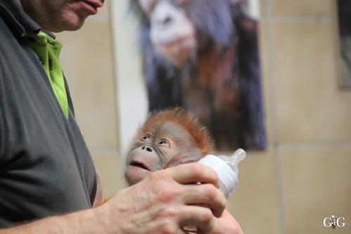 Berliner Zoo 22.02.201569
