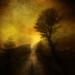 Turners tree by Jem Salmon