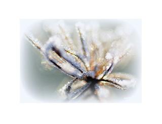 les fleurs sont belles en hiver N°2