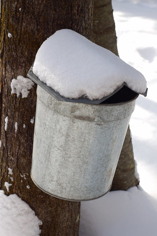 Maple Sugaring in Woodstock, NY by Eve Fox, the Garden of Eating, copyright 2015