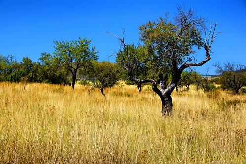 italy tree field alberi gold italia minolta sony campo alpha oro a77 minoltamount sonyalpha minoltaaf alphamount marioalpha marioottaviani potd:country=it