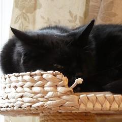 Watching ... #catsofinstagram #blackcat #oneeyedcat