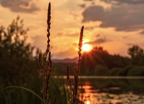 ngc beautyful sunset travel nice sun night a6300 e50f18oss 50mm sony ilce hungary magyar zemplén tokaj sárospatak bodrog óbodrog berek sonyflickraward
