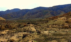 Burnt desert near Wrightwood, California. Months back, this area was destoryed by a forest/desert fire. Only mother nature can help restore this land. #california #outside #outdoors #mothernature #fire #landscape #nature #johnkeraphotography #mountains #d