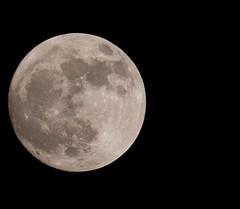 'Happiness is a full moon..' Taken by Fujifilm XT2 + XF1.4X TC + XF 100-400 lens.. #azayer #bahrain #fullmoon #moon #fujifilm #xt2 #xf100400