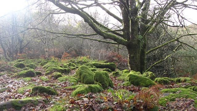 Woodland above Becka Brook
