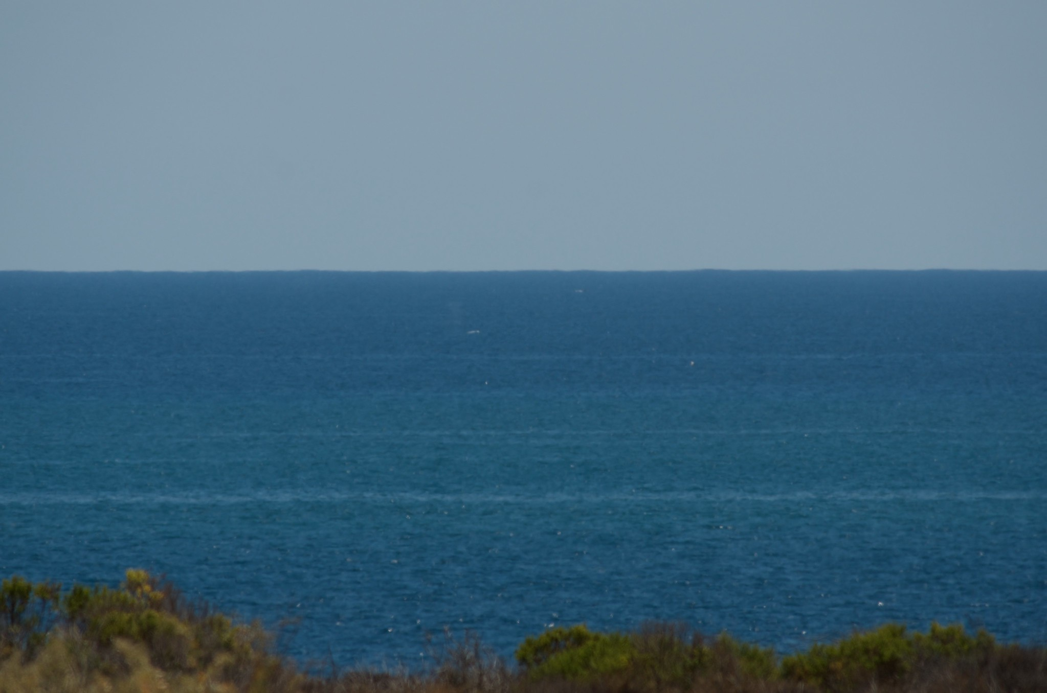 Newport Beach Whale Watching Cruise