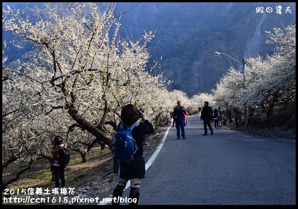 2015信義土場梅花DSC_9350