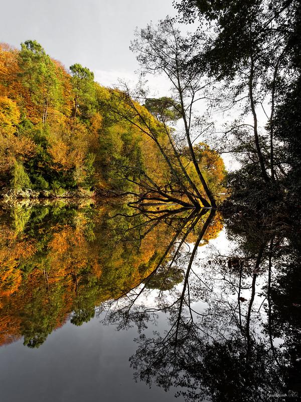 L'automne dans les Landes 15665195710_29c5b6ff9e_c