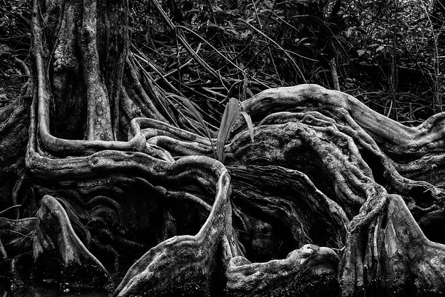 Roots from Flickr via Wylio