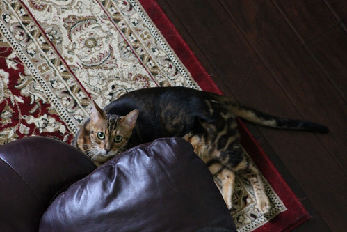 Whiskers & Paws: September 2015 Edition